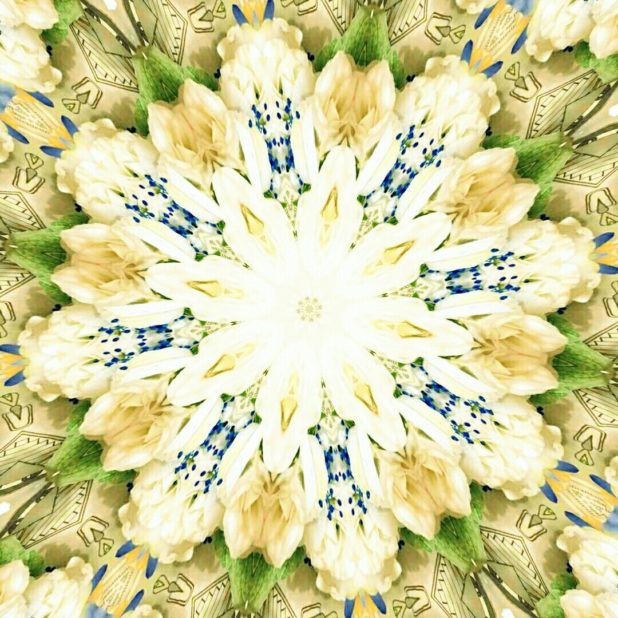 Bunga imut iPhone7 Plus Wallpaper