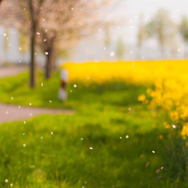 Pemandangan blur bunga ki hijau iPhone7 Plus Wallpaper