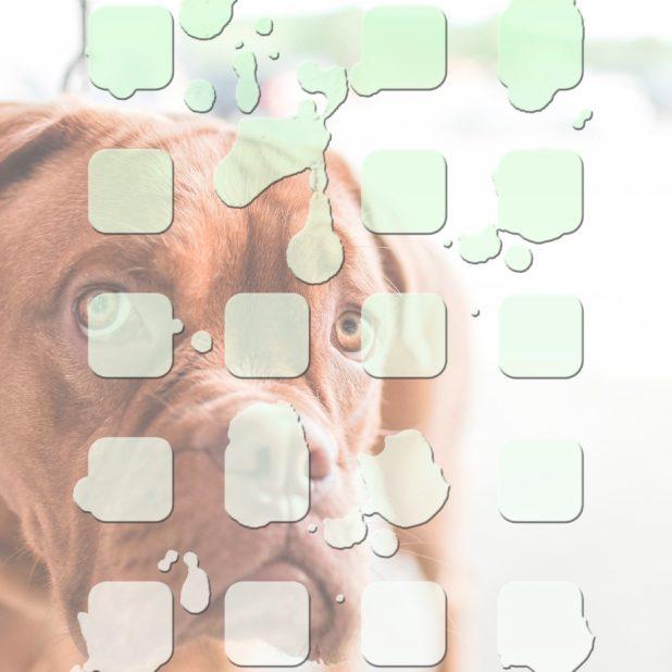 rak hewan hijau pola anjing iPhone7 Plus Wallpaper
