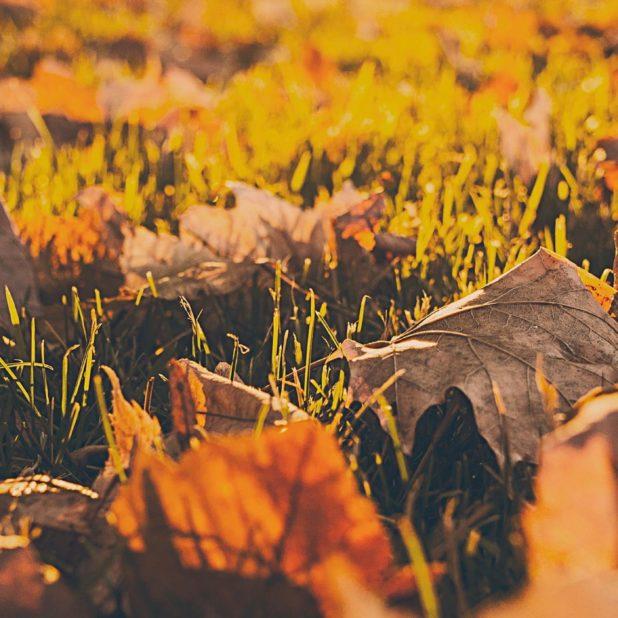 pemandangan daun-daun kering jatuh blur iPhone7 Plus Wallpaper
