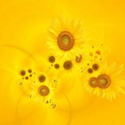自然花黄の iPad / Air / mini / Pro 壁紙