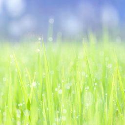 自然葉緑の iPad / Air / mini / Pro 壁紙