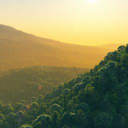 風景森の iPad / Air / mini / Pro 壁紙