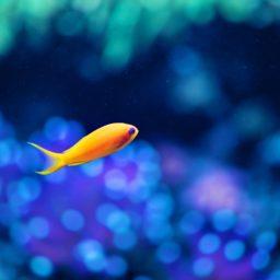 動物魚の iPad / Air / mini / Pro 壁紙