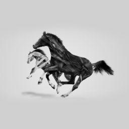 動物馬の iPad / Air / mini / Pro 壁紙