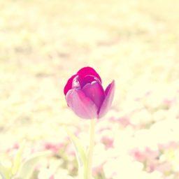 自然花紫の iPad / Air / mini / Pro 壁紙