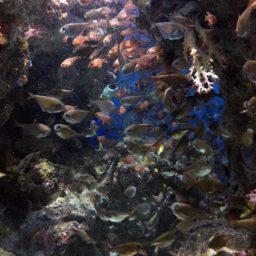 動物熱帯魚南国水族園の iPad / Air / mini / Pro 壁紙