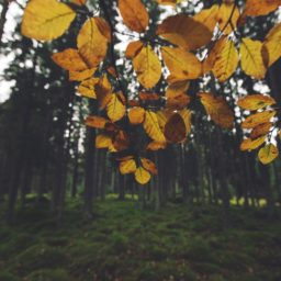 風景森林葉黄の iPad / Air / mini / Pro 壁紙