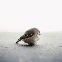 動物小鳥の iPad / Air / mini / Pro 壁紙