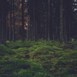 風景森林苔の iPad / Air / mini / Pro 壁紙