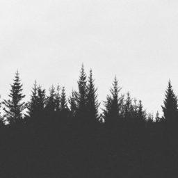 風景森モノクロの iPad / Air / mini / Pro 壁紙