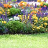 花風景緑カラフル