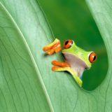 動物カエル緑