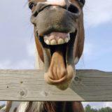 馬動物茶色