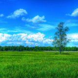 風景自然緑青