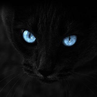猫黒の iPhone4s 壁紙