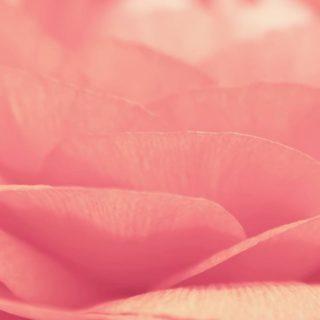 自然花桃の iPhone4s 壁紙