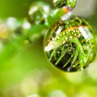 自然草緑の iPhone4s 壁紙