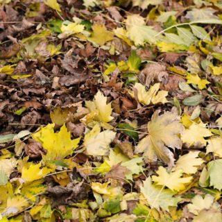 自然落ち葉黄の iPhone4s 壁紙