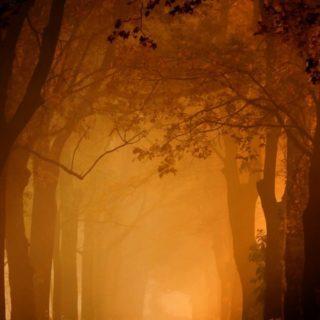 風景並木道橙の iPhone4s 壁紙
