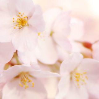 自然花白の iPhone4s 壁紙