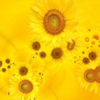 自然花黄の iPhone4s 壁紙