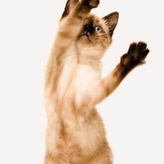 猫子猫の iPhone4s 壁紙