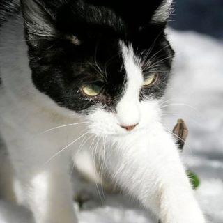猫雪の iPhone4s 壁紙