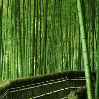 風景竹緑の iPhone4s 壁紙
