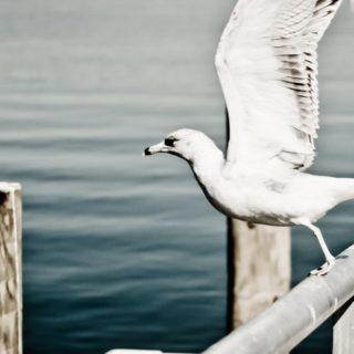 動物鳥白の iPhone4s 壁紙