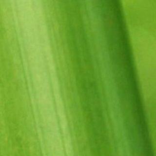 自然葉緑の iPhone4s 壁紙