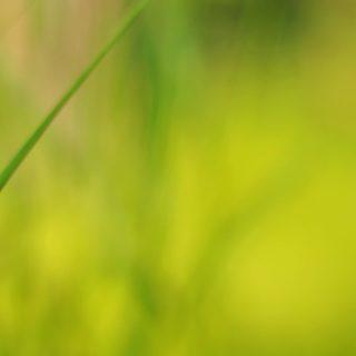 自然黄緑ぼかしの iPhone4s 壁紙