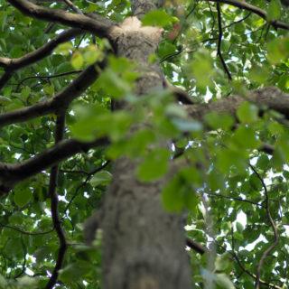 自然木緑の iPhone4s 壁紙