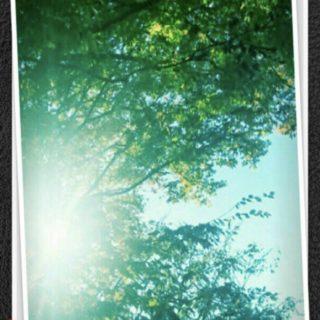 木々 太陽の iPhone5s / iPhone5c / iPhone5 壁紙