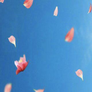 花びら 空の iPhone5s / iPhone5c / iPhone5 壁紙