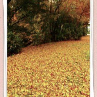 落ち葉 木々の iPhone5s / iPhone5c / iPhone5 壁紙
