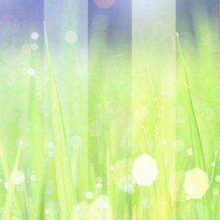 草むら 光の iPhone5s / iPhone5c / iPhone5 壁紙