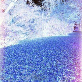 ブルー 落ち葉の iPhone5s / iPhone5c / iPhone5 壁紙