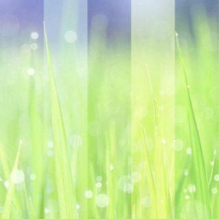 草むら 幻想的の iPhone5s / iPhone5c / iPhone5 壁紙