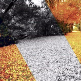 落ち葉 光の iPhone5s / iPhone5c / iPhone5 壁紙
