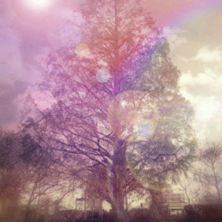 木 風景の iPhone5s / iPhone5c / iPhone5 壁紙