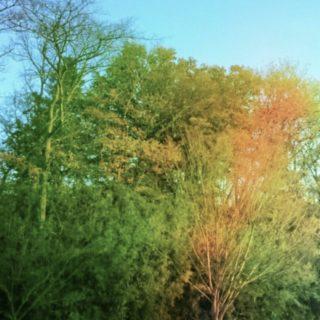 緑 景色の iPhone5s / iPhone5c / iPhone5 壁紙