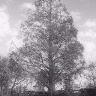 木 公園の iPhone5s / iPhone5c / iPhone5 壁紙