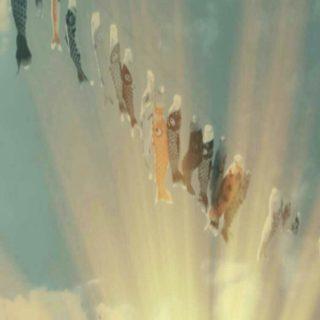 こいのぼり 空の iPhone5s / iPhone5c / iPhone5 壁紙