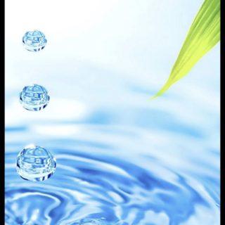水滴 葉の iPhone5s / iPhone5c / iPhone5 壁紙