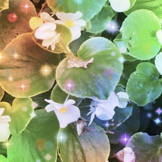 花 光の iPhone5s / iPhone5c / iPhone5 壁紙