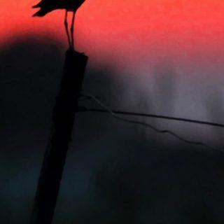 風景動物鳥の iPhone5s / iPhone5c / iPhone5 壁紙