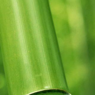 自然竹緑の iPhone5s / iPhone5c / iPhone5 壁紙
