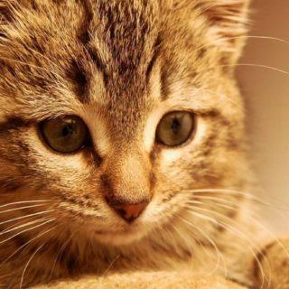 猫子猫の iPhone5s / iPhone5c / iPhone5 壁紙
