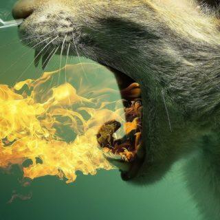 猫火緑の iPhone5s / iPhone5c / iPhone5 壁紙
